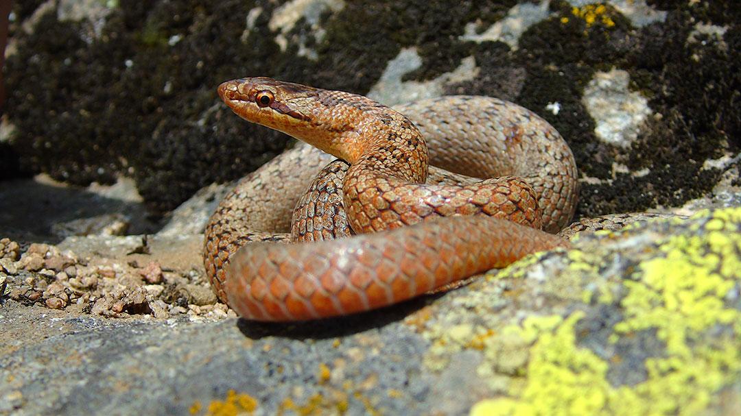 Fobijata od zmii moze samo da ni nasteti 1