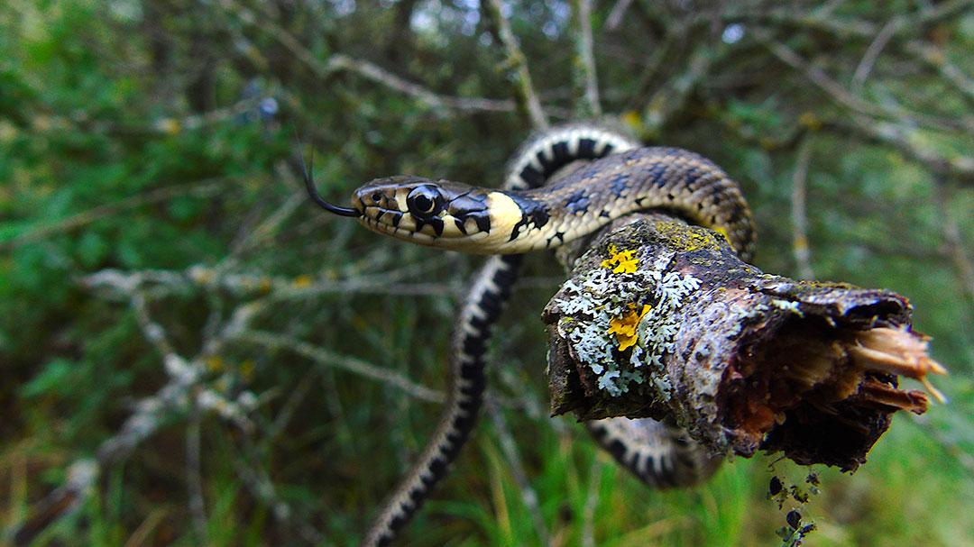 Fobijata od zmii moze samo da ni nasteti 2