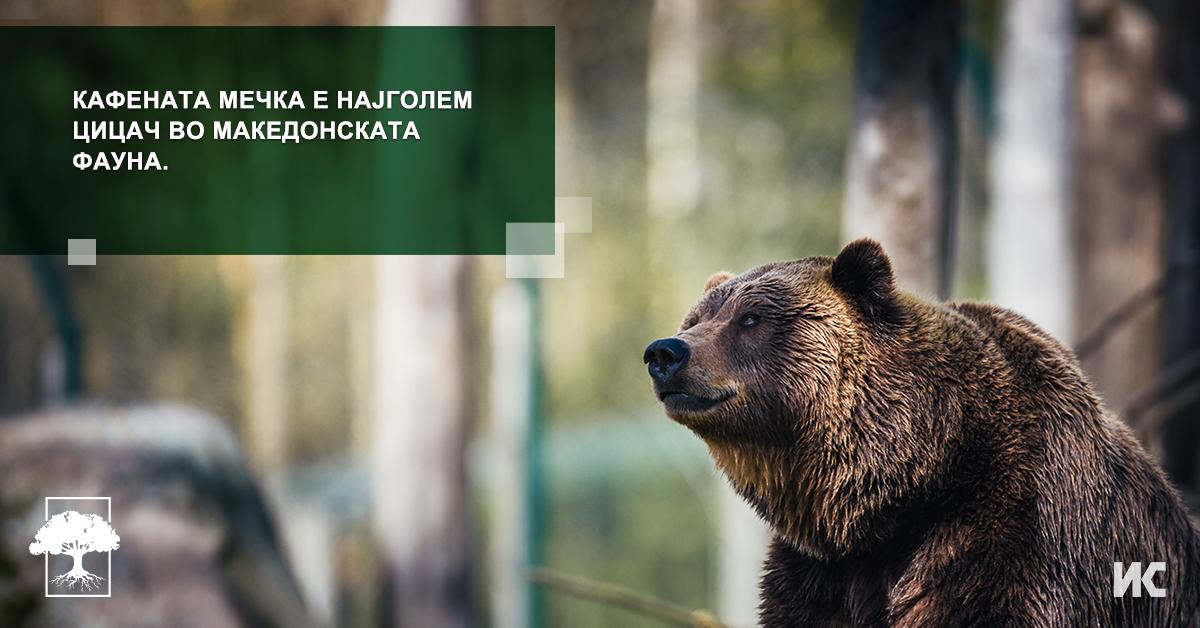 Kafenata mecka vo Makedonija FB