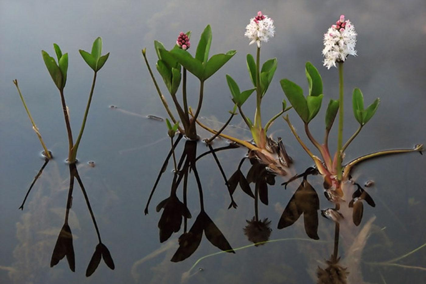 Lokuf mal dokaz za uspesno spasen ekosistem 2