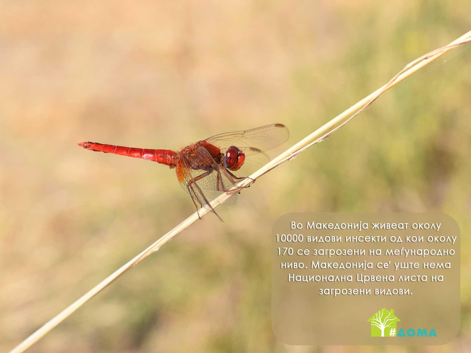 Vilinsko konjce Biodiverzitet na insekti