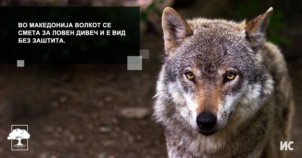 Volkot vo Makedonija FB
