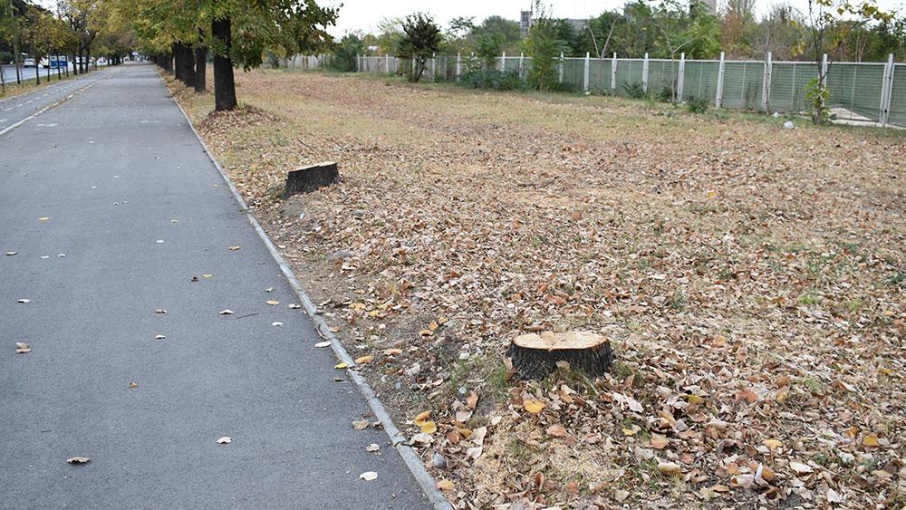 secenjeto na drvja vo skopje mora da zapre 6