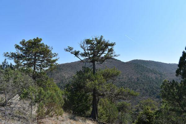 kozle-mala-tvrdina-na-nacionalniot-biodiverzitet-150AE6C0E-248A-B864-1106-DBF32B265BE7.jpg