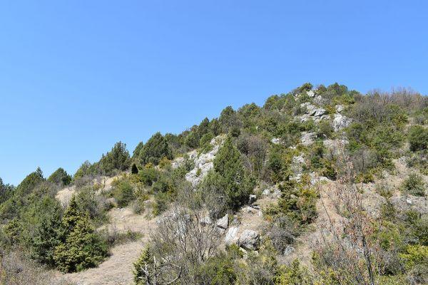 kozle-mala-tvrdina-na-nacionalniot-biodiverzitet-2C4759879-99A3-745A-5668-5330BF0416A3.jpg