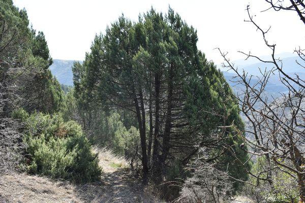 kozle-mala-tvrdina-na-nacionalniot-biodiverzitet-31FEA6BD4-4F0B-F5A5-1142-F16774389C5F.jpg