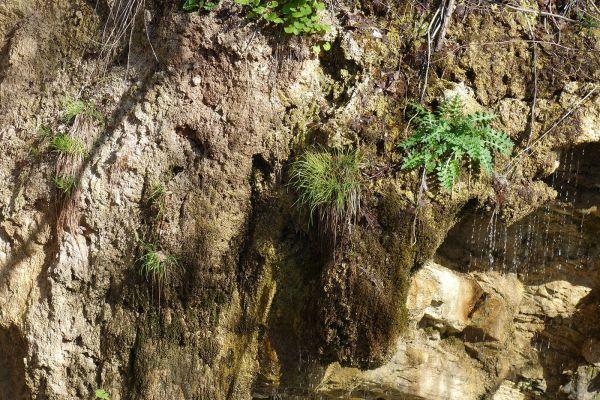 prirodnoto-bogatstvo-na-selo-zirovnica-tairovska-reka-131A31F38D-1057-5C12-9642-5E3B360CF8FA.jpg