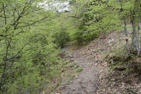 niz-planinarskite-pateki-na-skopska-crna-gora-2D9F55656-76C6-640A-6109-9ED732C9803D.jpg
