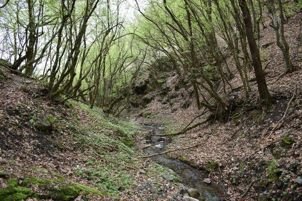 niz-planinarskite-pateki-na-skopska-crna-gora-534DFE75E-4E44-E2AF-464C-87661C4C3151.jpg