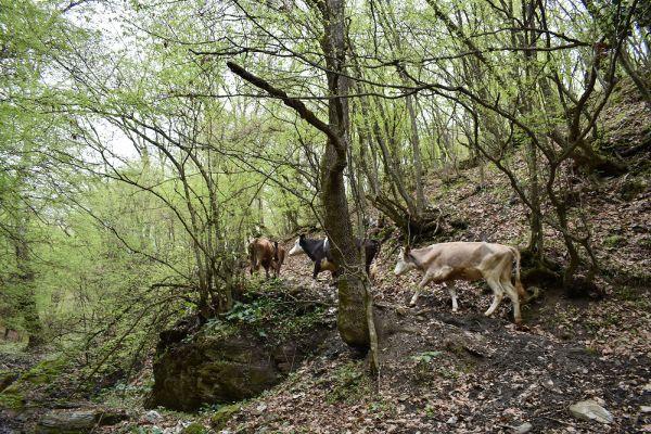 niz-planinarskite-pateki-na-skopska-crna-gora-10CA8AE85C-0D80-1403-6F51-7EFF0D1E2C07.jpg