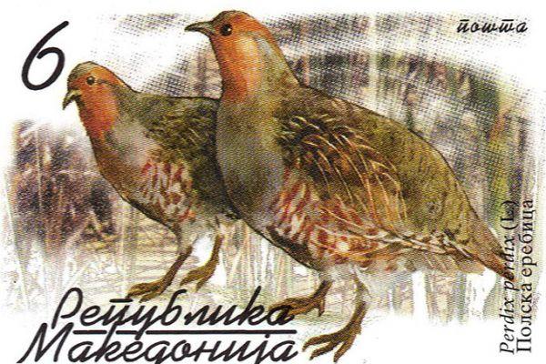 makedonskata-priroda-niz-postenskite-marki-46C691955-C5ED-97E6-4564-7FA17900763A.jpg