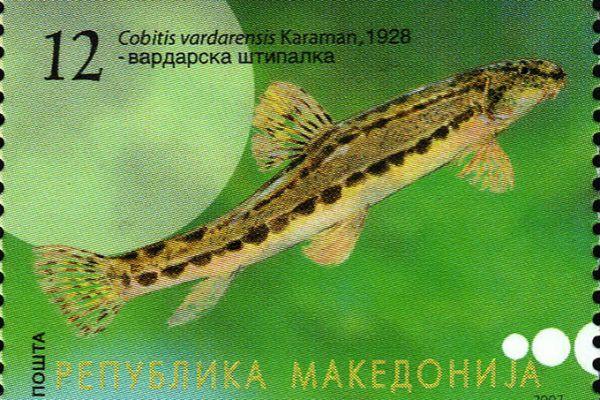 makedonskata-priroda-niz-postenskite-marki-11402F23EF-6080-9228-CFA6-11E25C964983.jpg