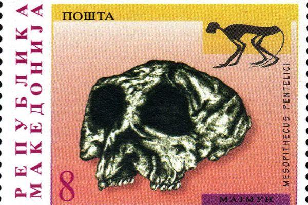 makedonskata-priroda-niz-postenskite-marki-29D50A7BE2-8F30-5D99-91A0-DB07C81525E2.jpg