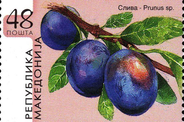 makedonskata-priroda-niz-postenskite-marki-312E58961A-73B8-4D16-9327-80288BE7D03F.jpg