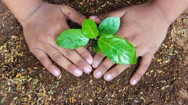pricinata za rastot na sumski povrsini e faktorot na poleznost a zgolemeno nivo na CO2 3