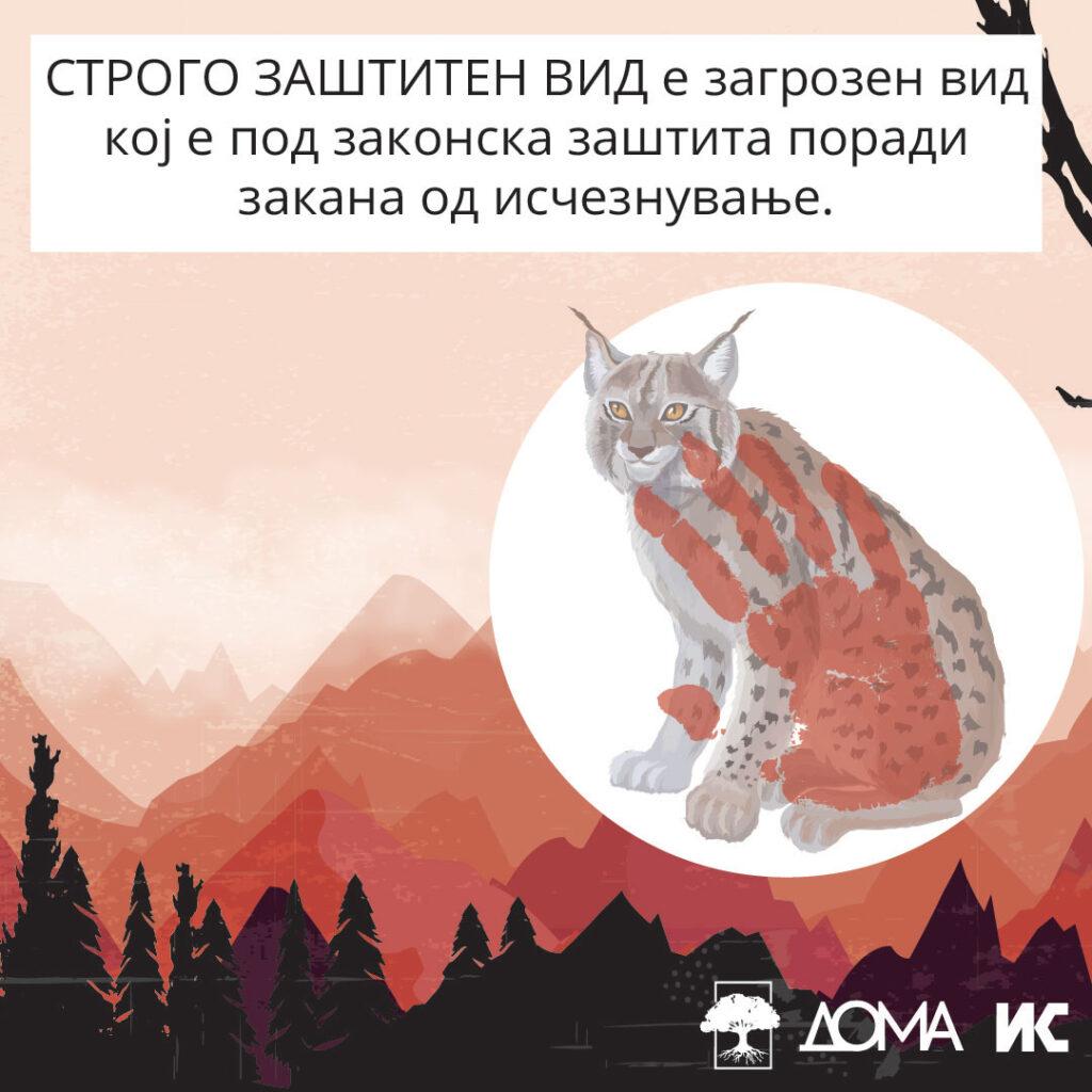 Илустрација од рис со текст: Строго заштитен вид е загрозен вид кој е под законска заштита поради закана од исчезнување.